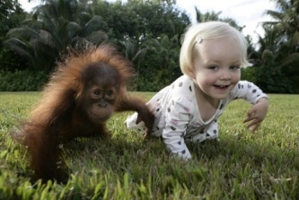 Siamo Scimmie ?